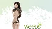 Vista previa del artículo Weeds 8×08: Cinco millas desde Yetzer Hara