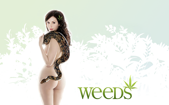 Weeds Wallpaper 4 by burnjoeburn opt Weeds 8x08: Cinco millas desde Yetzer Hara
